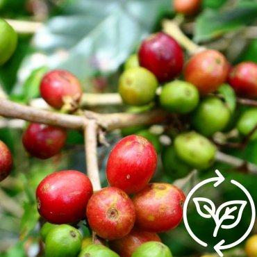 Pflanz einen Kaffeebaum im Südsudan