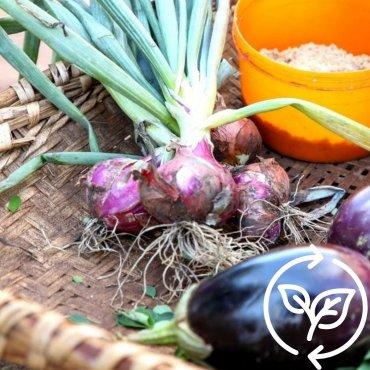 Schenk Saatgut für Gemüse