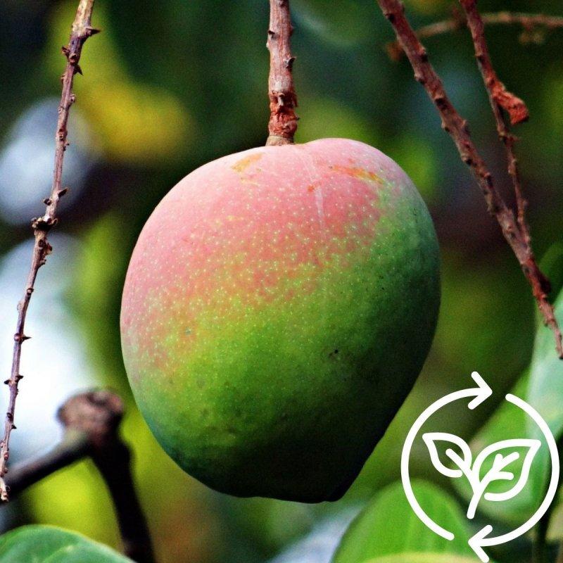 Pflanz einen Mangobaum im Südsudan